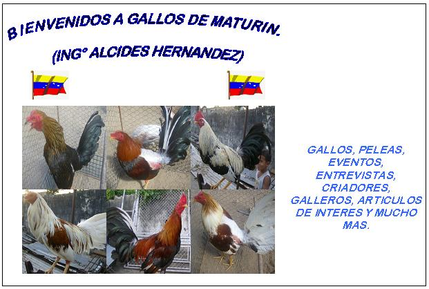 GALLOS DE MATURIN (Ing° Alcides Hernández)