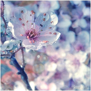 Spring Photo  Seen On www.coolpicturegallery.us