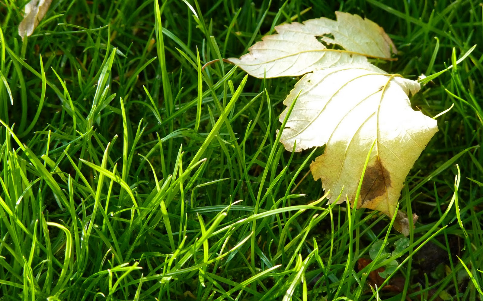 http://4.bp.blogspot.com/_2UbsSBz9ckE/S6qRN_kMMkI/AAAAAAAABEg/_QPSAEn8P14/s1600/Morning_Grass_HD_wallpaper.jpg