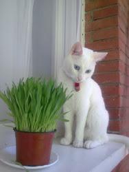 Mi gato Mitzu