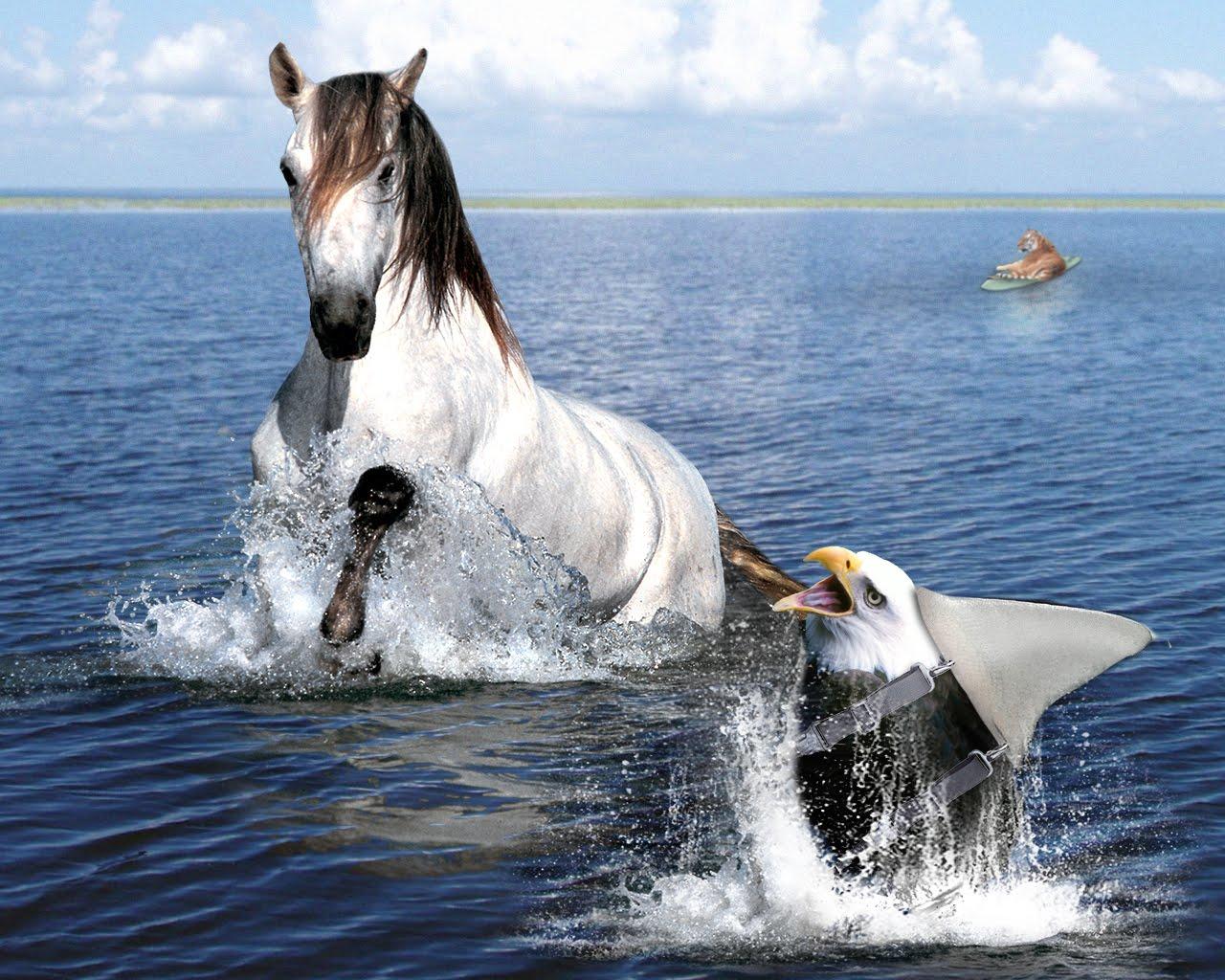 Shark Mixed with Horse