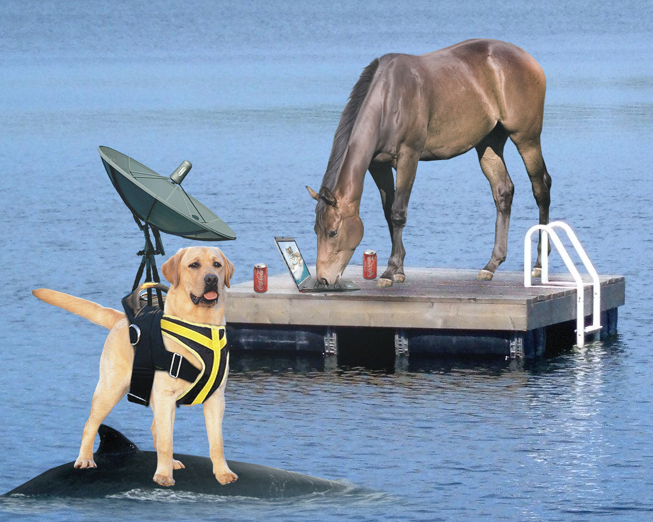 Wi-fi Dog Provides Internet For Stranded Horse