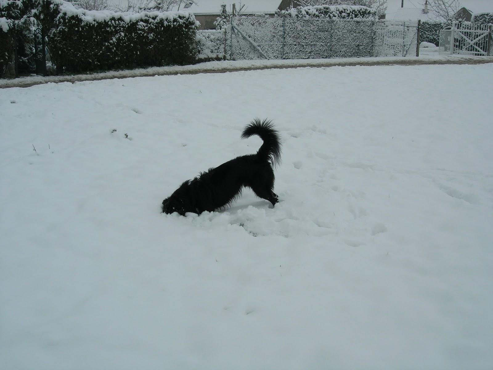 champigny sur yonne et senonais non d 39 un chien que c 39 est bon la neige champigny. Black Bedroom Furniture Sets. Home Design Ideas