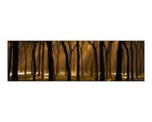 Bosque de Fernando Sánchez Fernández
