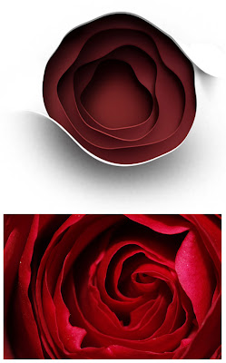rose, roses, red, love, conbo, contrast