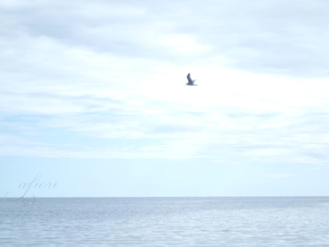 transparent bird sky ocean Smitingen Härnösand