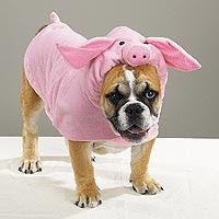 animales disfrazados