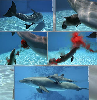 yesliz delfines: como se alimetan y como nacen los delfines