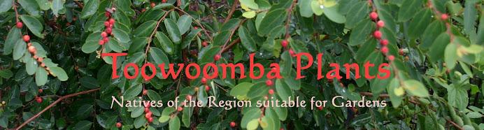 Toowoomba Plants