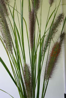 Ornamental Grasses Australia Toowoomba plants an ornamental grass suitable for gardens it is one of australias most commonly grown ornamental grasses it forms a clump above knee height with graceful arching leaves workwithnaturefo