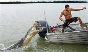 cocodrilo australia