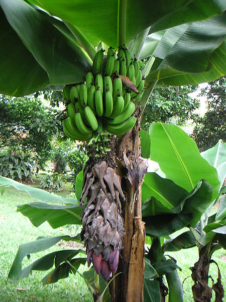 Banana Cafe Th St