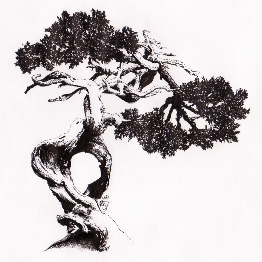 Joshua Sierk Arts 007 Bonsai