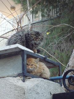 Порно мюзикл cats