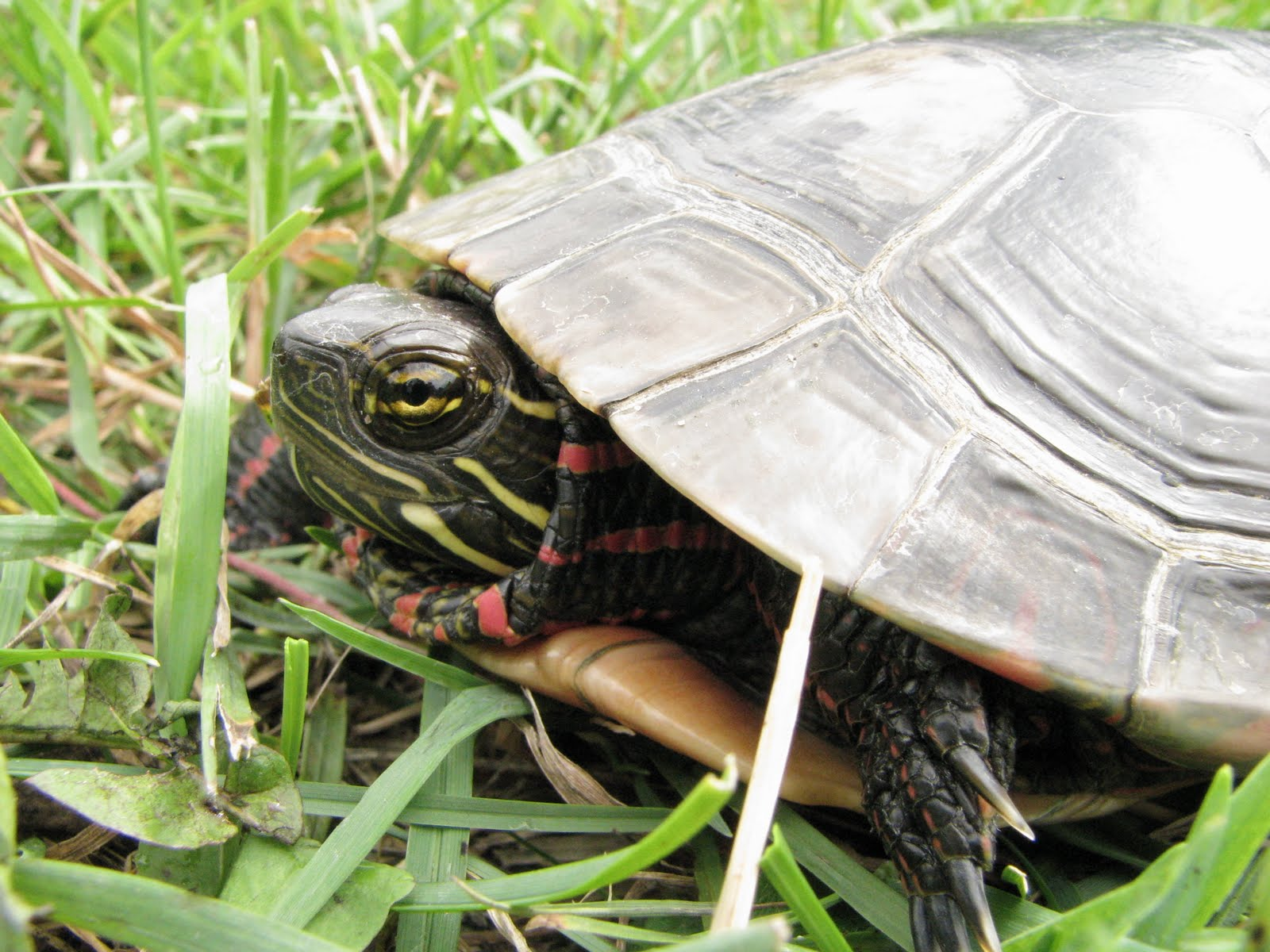 Do turtles make good pets? Not for everybody.
