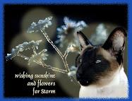 Stormiekins