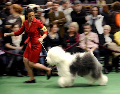 Annual Westminster Kennel Club Dog Show 2010
