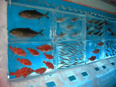 Japan's Frozen Aquarium Seen On www.coolpicturegallery.net