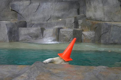 Polar Bears With Cones On Their Heads Seen On  www.coolpicturegallery.net