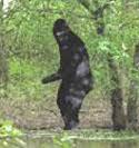 bigfoot,muncul di amerika, Sasquatch,as