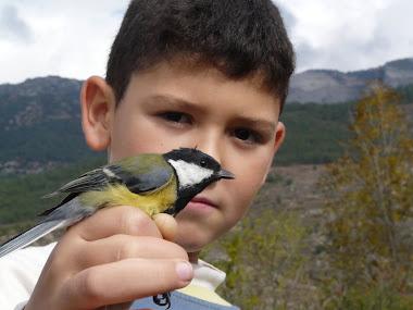anellament d'ocells