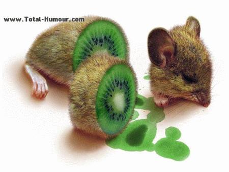 kiwi-souris