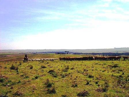 Campereando no Pampa
