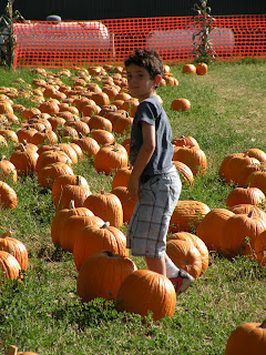 Boy in the pumpkin patch