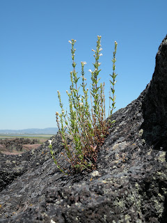 Lava Beds National Monument, finding life in unexpected places in the Lava Beds