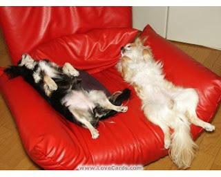 perros durmiendo en sillón