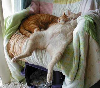 gatos durmiendo en sillón