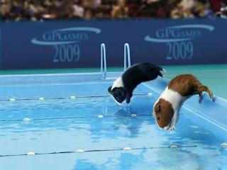 a nadar