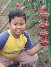 MY SON : PENGUSAHA BUAH NAGA