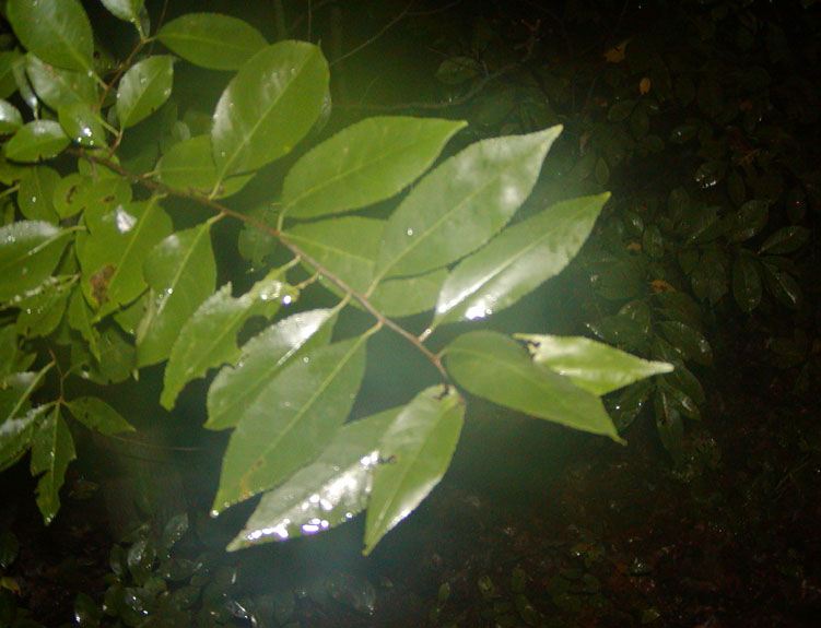 [-Backyard+leaves-size+rev..JPG]