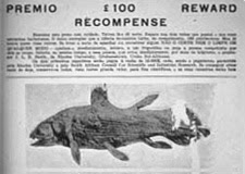 Newspaper reward for a coelacanth