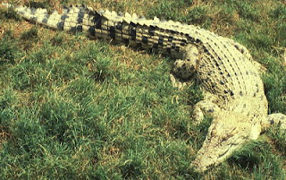 http://bintancenter.blogspot.com/2012/04/spesies-hewan-purba-yang-masih-hidup-di.html