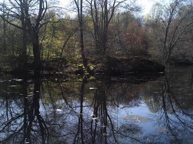 Mondo Ponds, Milford, CT 2009