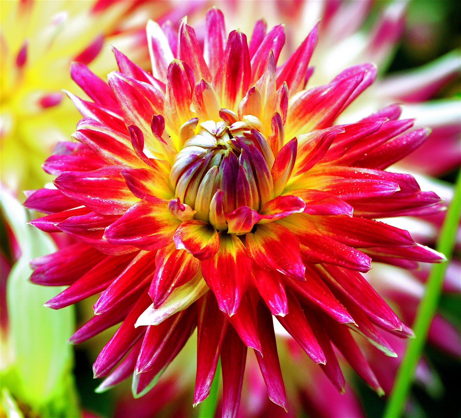 luann kessi  raffle quilt top  flowers  u0026 pies