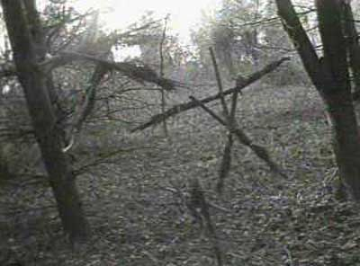 """blair witch project true story 17 facts about """"the blair witch project"""" that will blow your mind safe word: taco."""