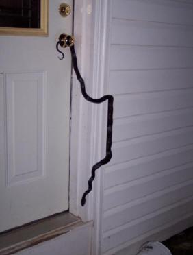 Black Snake Terry