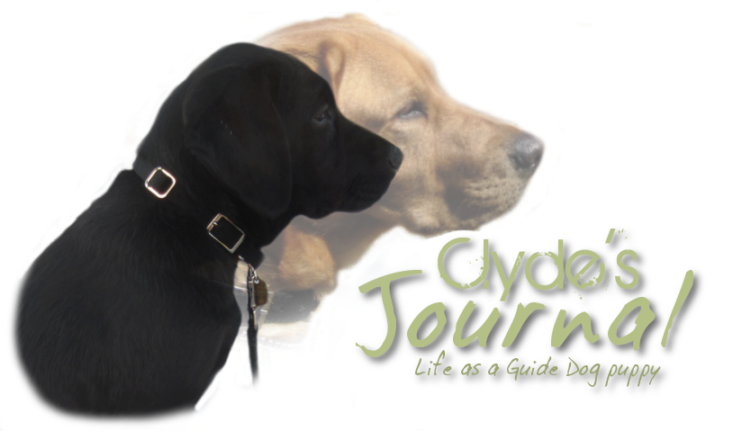 Clyde's Journal: Life as a Guide Dog puppy