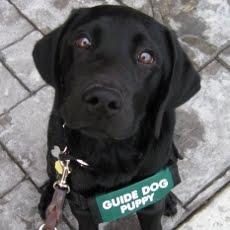 Puppy #2: Clyde