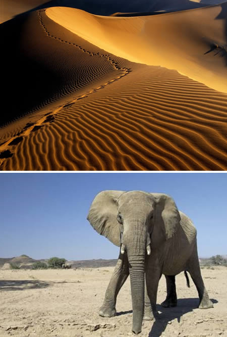 Namib (Namibia): the only desert with elephants