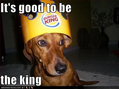 funny-dog-pictures-good-to-be-king%255B1%255D.jpg
