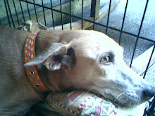 And I am Sweepy and Bogart's late Mumsy Pica