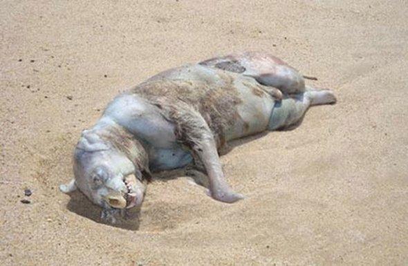 The Daily Bizarre: Strangest Animals On Earth Oarfish Skull
