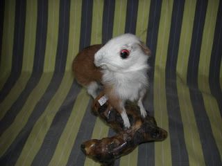 Crappy Taxidermy of the Day Seen On www.coolpicturegallery.net