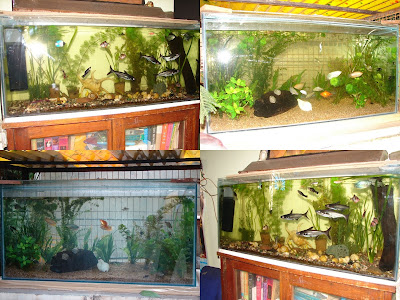 Aquariums In Houses. Aquariums#39; at our home,