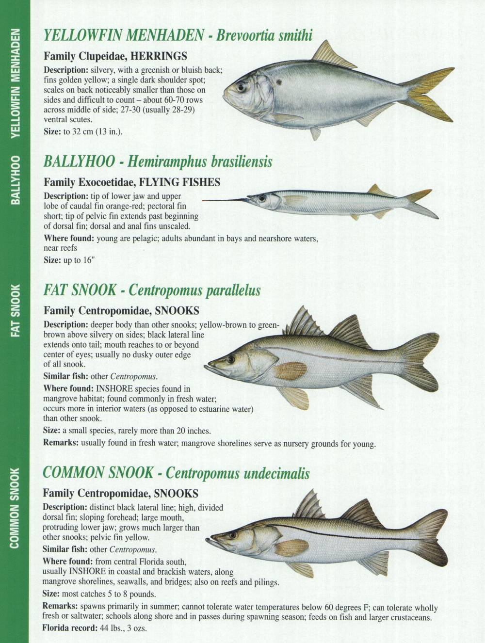below is a chart fish you can catch when chartering with us also see ... Shark Species Chart