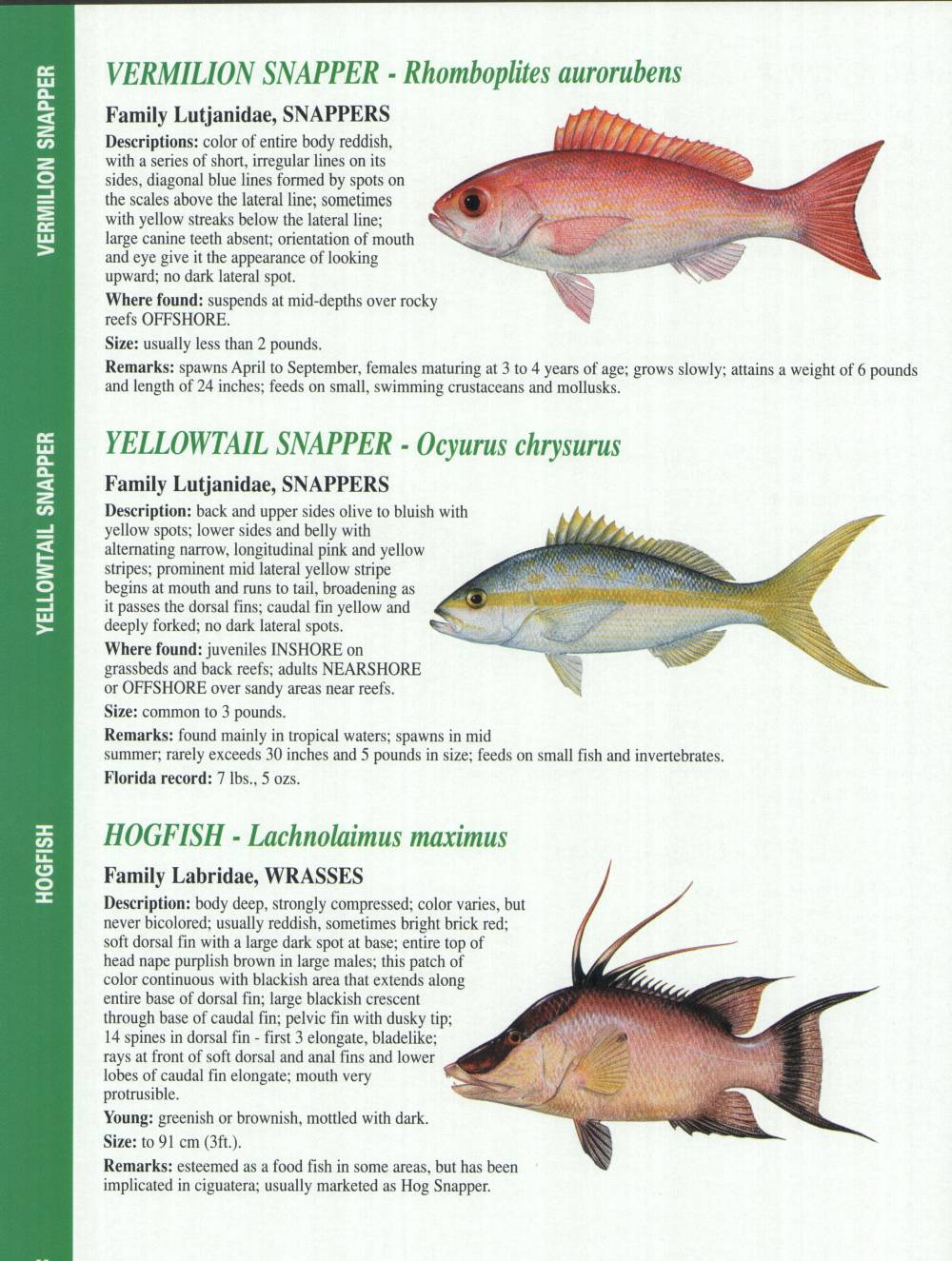 Crystal river fishing report florida gulf fish for The fish report
